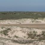 beach_cattle_002
