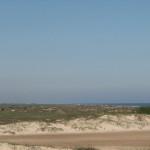 beach_cattle_003