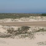 beach_cattle_004