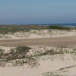 beach_cattle_005