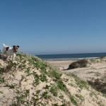 beach_dunes_corky