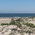 beach_dunes_horse