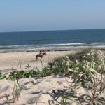beach_dunes_horse-copy