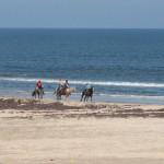beach_horses