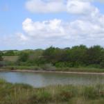 colorado-river-1