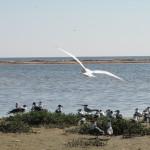 birds_at_jetties_001-2