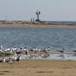 birds_at_jetties_002-2