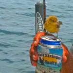 beer_bird-2